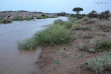 أمطار الغيث والرحمة تسقط على أغلب مناطق البلاد